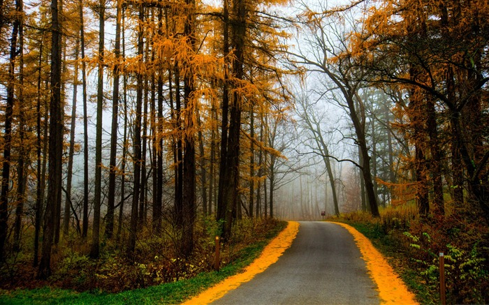 Title:Autumn Morning Road Misty-Nature HD Wallpaper Views:1654