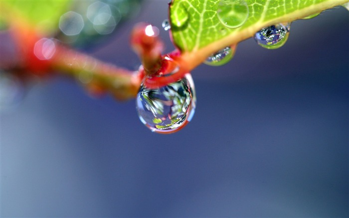 Branch dew drops shape-photography HD wallpaper Views:1798