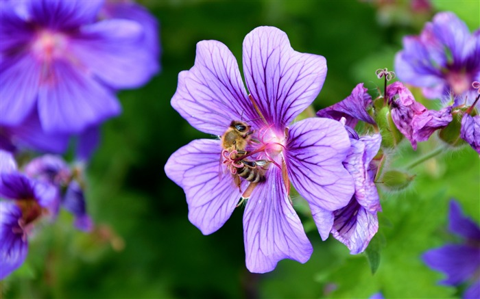 Flower nectar pollen bee-High Quality HD Wallpaper