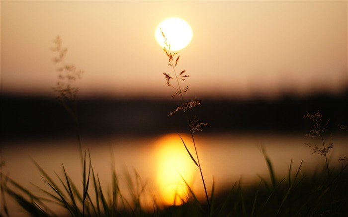 Grass sunlight sunset-photography HD wallpaper Views:1818