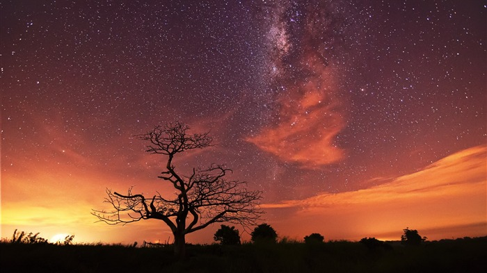 Grassland withered under the stars-Windows 10 HD Wallpaper Views:6933
