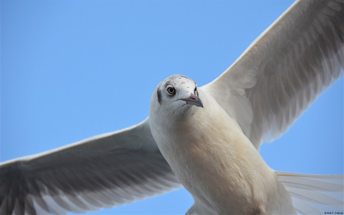 Seagull-Windows 10 Theme HD Wallpaper Views:2325