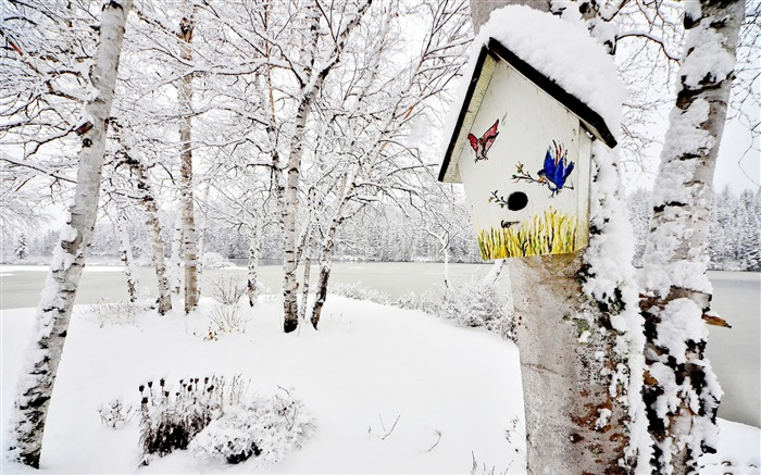 Title:Winter Trees Snow Birch birdhouse-Landscapes HD Wallpaper Views:1858