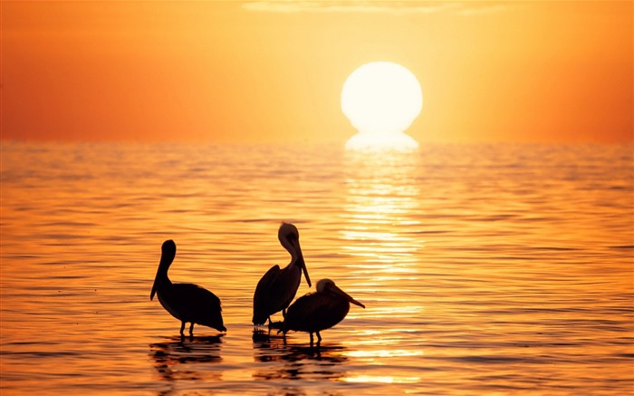 Birds Sun Water Sunset-Animal World HD Wallpaper Views:2281