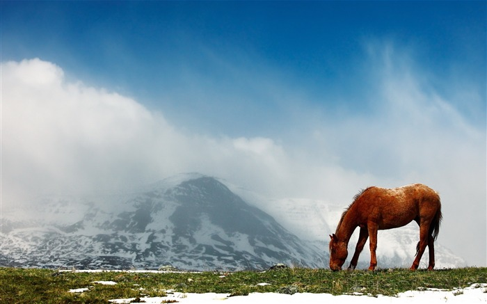 Horse mountains snow peaks sky-Animal Photo HD Wallpaper Views:1685