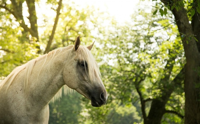 Nature Tree Summer Horse-Animal World HD Wallpaper Views:1595