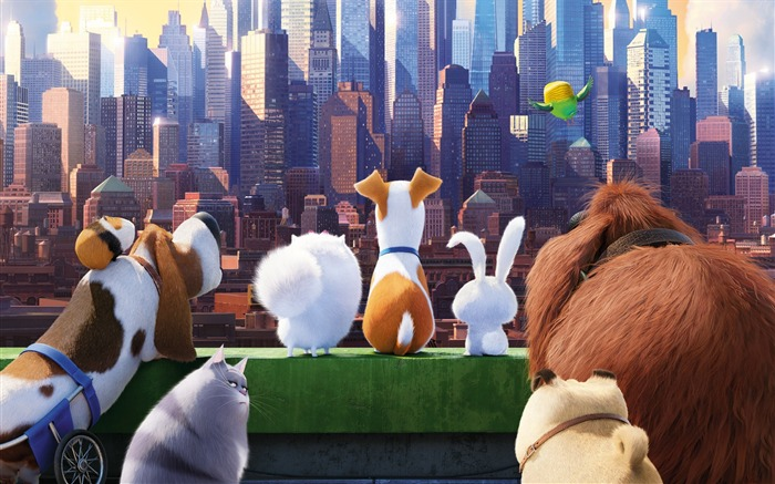 The secret life of pets-2016 Movie High Quality Wallpaper Views:1892