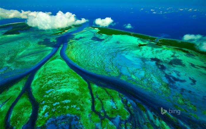 Tidal Channels Aldabra Seychelles-2016 Bing Desktop Wallpaper Views:1730