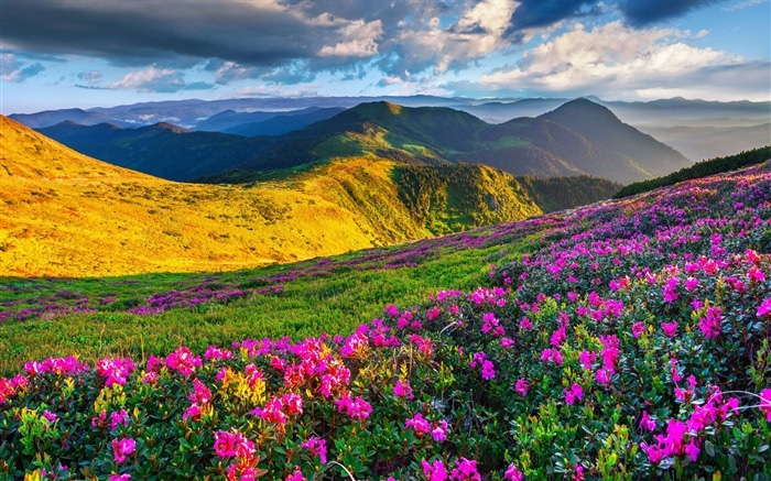 Alps meadows azalea mountains-Nature Photo HD Wallpaper Views:1314