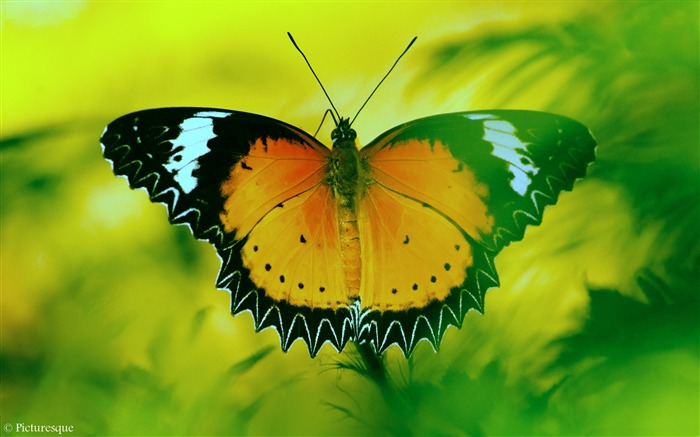 Beautiful butterfly-High Quality HD Wallpaper Views:1113