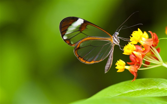 Butterfly insects flowers-High Quality HD Wallpaper Views:1314