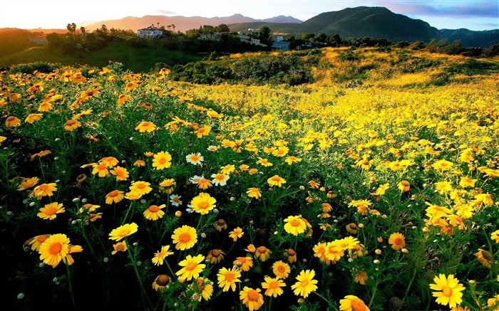California Spring Comes Early -High Quality HD Wallpaper Views:1604