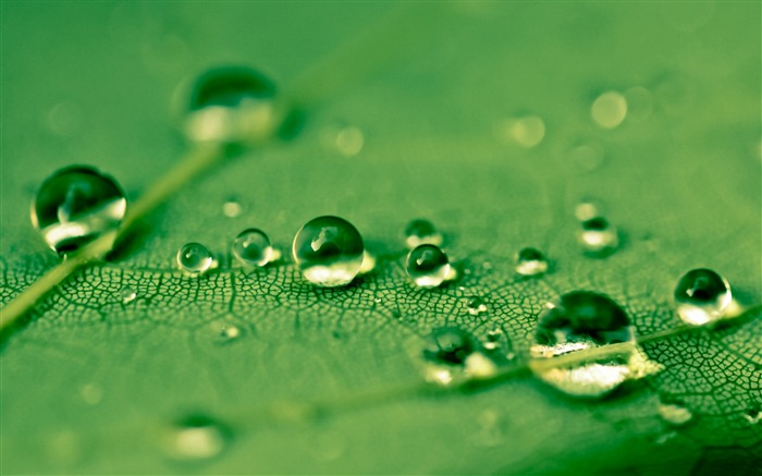 Drops Green Water Leaf-Macro photo HD Wallpaper Views:2001
