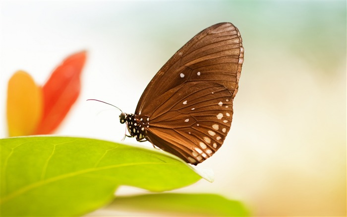 Fresh Green Leaves Butterfly-High Quality Wallpaper Views:2044