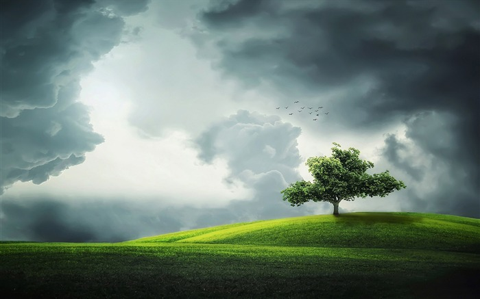 Lone tree on a hill-High Quality HD Wallpaper Views:1464