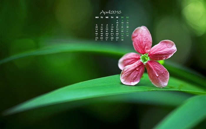 Small red flowers-April 2016 Calendar Wallpaper Views:1807