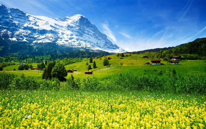 Switzerland mountains meadows wildflowers-Nature High Quality Wallpapers Views:977