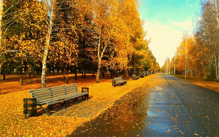 Autumn park bench cedar-Nature Scenery HD Wallpaper Views:2649