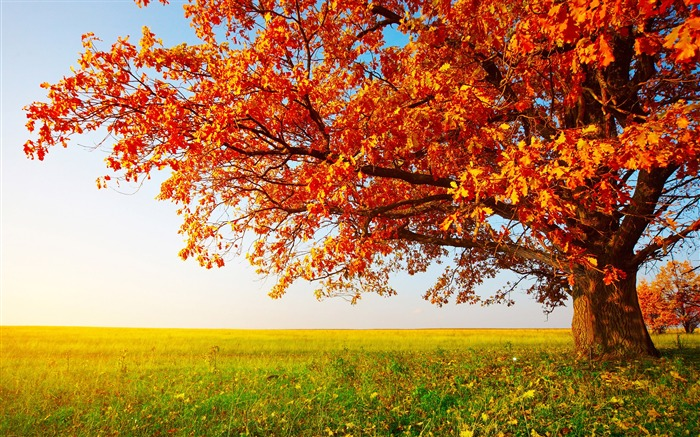 Dream Autumn Maple prairie-Nature Scenery HD Wallpaper Views:5094