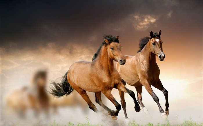 Steppe horse galloping animal theme HD Wallpaper Views:7160