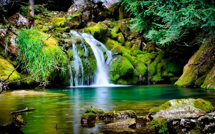 Moss jungle streams-Nature Scenery HD Wallpaper Views:3199