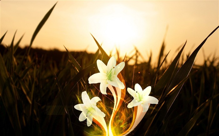 White lilies sunset-Widescreen High Quality Wallpaper Views:728