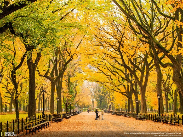 Title:Autumn at Central Park New York-2016 National Geographic Wallpaper Views:2085