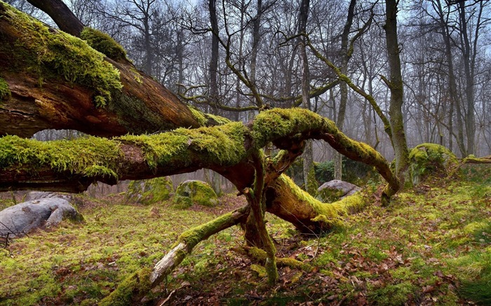 Dry mossy wood forest-scenery HD wallpaper Views:1511