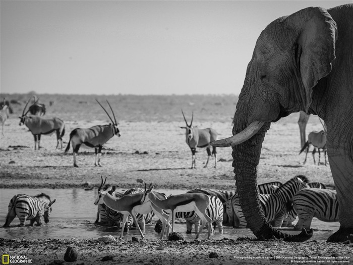 Etosha National Park Namibia-2016 National Geographic Wallpaper Views:2340