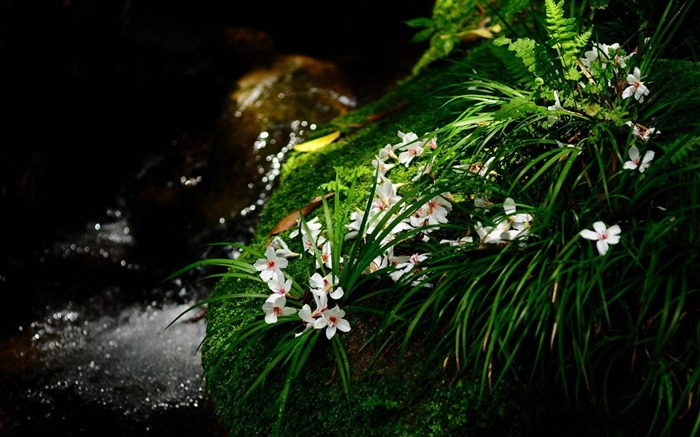 Flowers grass moss stone stream-Flowers Photo HD Wallpaper Views:1233