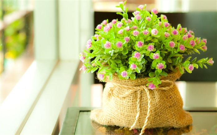 Flowers small green bag-Flowers Photo HD Wallpaper Views:1849