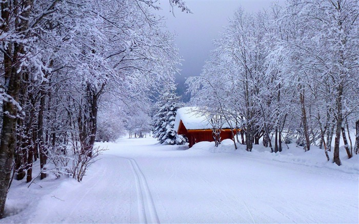 Forest snow road house-nature HD photo wallpaper Views:1918