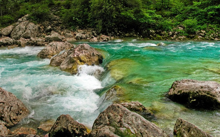 Forest whirling river-scenery HD wallpaper Views:583