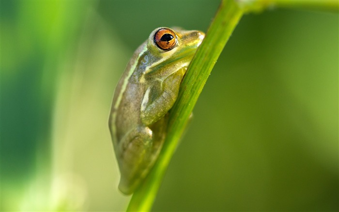 Title:Frog grass green background-Animal Photo HD Wallpaper Views:1681