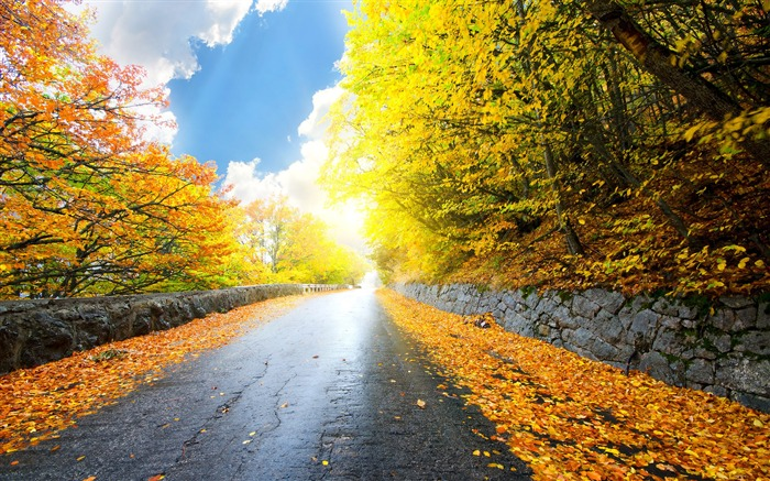 Autumn forest road-HD Retina Wallpaper Views:869