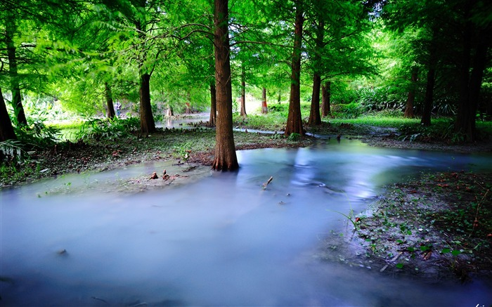 Green jungle wetlands-HD Retina Wallpaper Views:1514