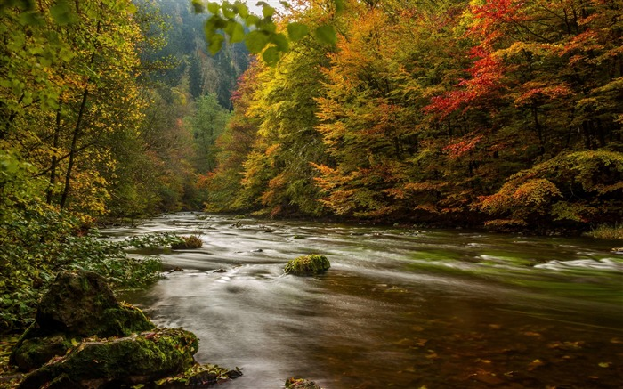 Harz germany autumn river trees-Scenery High Quality Wallpaper Views:1521