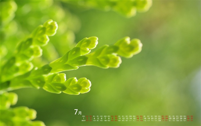 July 2016 Calendar High Quality Wallpaper 14 Views:1580