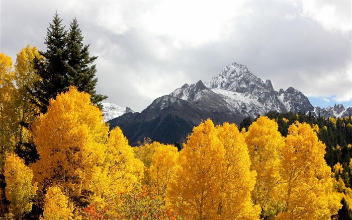 Mountains trees snow peaks autumn-Scenery High Quality Wallpaper Views:1862
