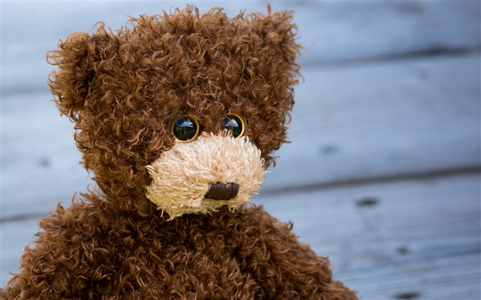 Teddy bear curly toy-2016 High Quality Wallpaper Views:1340