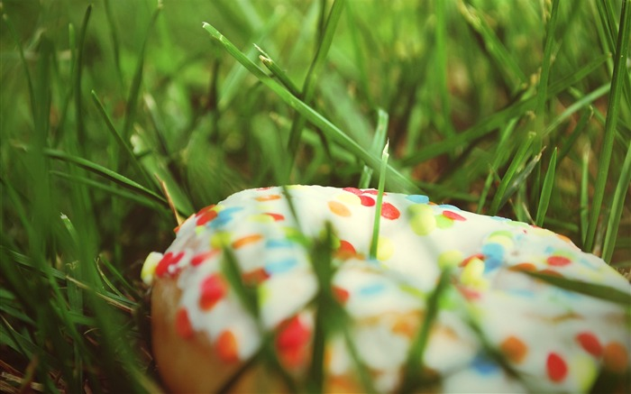 Donut sprinkling colorful grass-2016 Macro Photo Wallpaper Views:1782