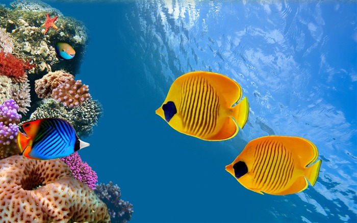 Fish ocean underwater-Animal Photos HD Wallpaper Views:1261