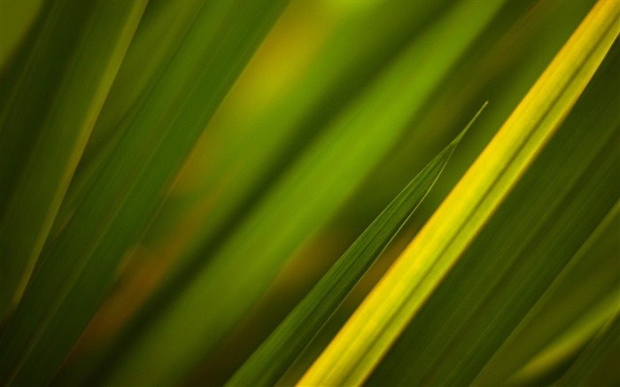 Grass leaves plant close-up-2016 Macro Photo Wallpaper Views:1198