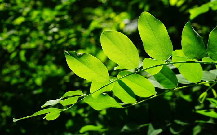 Green leaves macro-2016 High Quality Wallpaper Views:1617