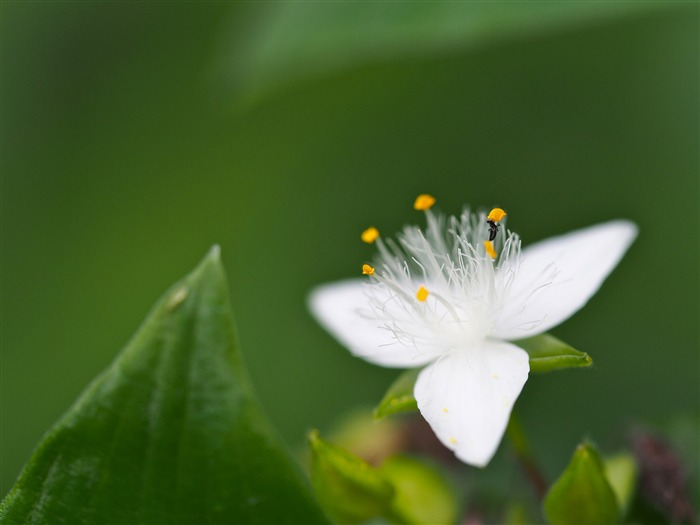 Petal Leaf flower And insect-Fresh theme wallpaper Views:1361