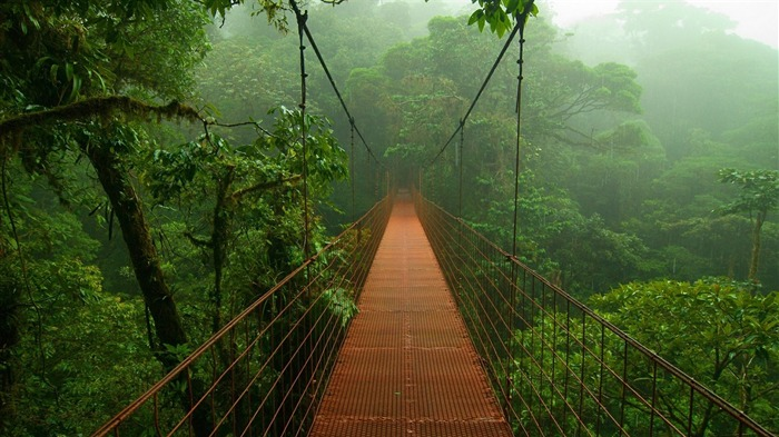 Tropical forest bridge-2016 High Quality Wallpaper Views:1372