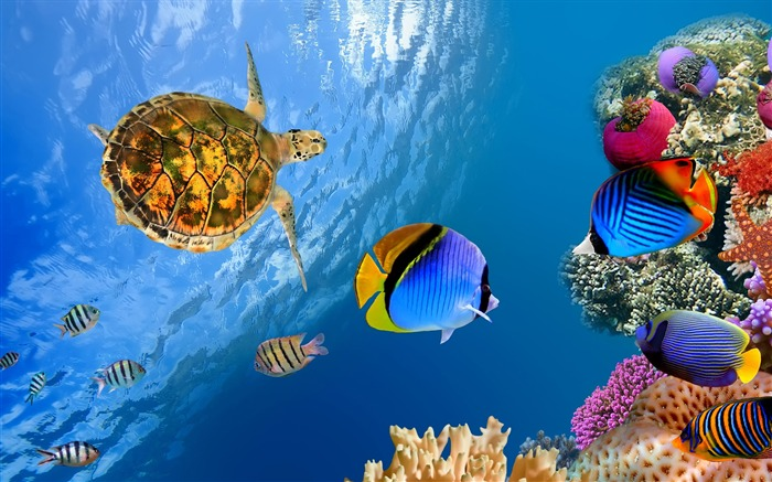 Underwater ocean landscape-Animal Photos HD Wallpaper Views:724