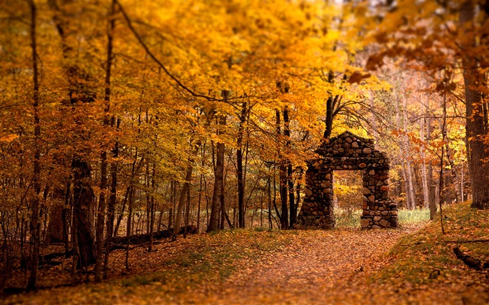 2016 Autumn Forest Nature Scenery HD Wallpaper Views:16450