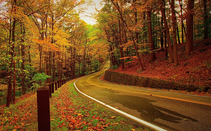 Autumn forest road turn-2016 Scenery HD Wallpaper Views:2466