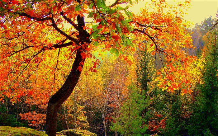 Autumn forest trees-2016 Scenery HD Wallpaper Views:2160